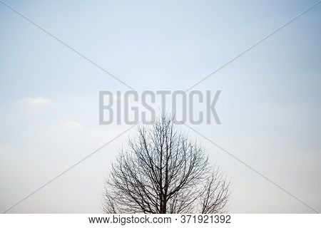 Big Tree Grows Solitary In An Empty Field Against The Sky