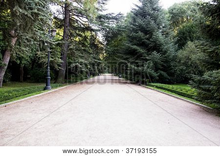 Large Pathway In A Park