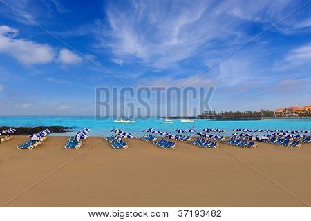 Beach Las vistas in Adeje coast hammocks at Tenerife south Canary Islands poster
