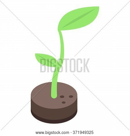Eco Ground Plant Icon. Isometric Of Eco Ground Plant Vector Icon For Web Design Isolated On White Ba