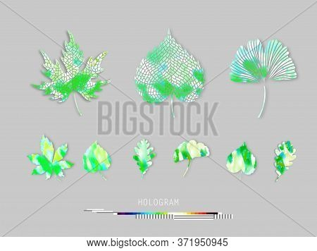 Leaves Green Set, Ginko Biloba, Oak, Linden, Chestnut Vector Summer Colorful Isolated And Silhouette