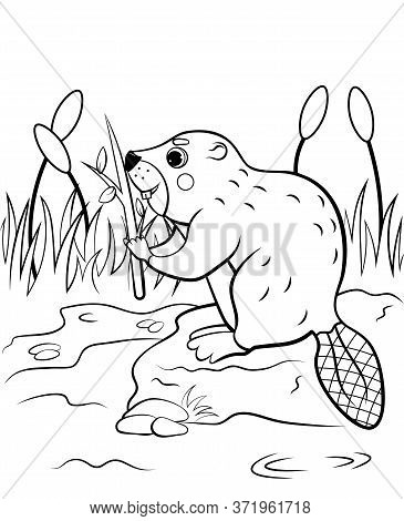 Coloring Page Outline Of Cute Cartoon Beaver With A Branch In The Reeds. Vector Image With Nature Ba