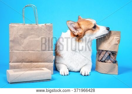 Obedient Welsh Corgi Pembroke Lies On Blue Background, Craft Bags And Box Of Tasty Dried Dog Treats