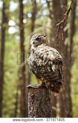 Owl Sitting On A Post In The Forest