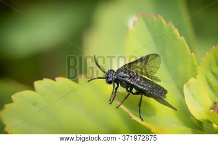 A Fly On A Branch Of A Plant, Close Up.