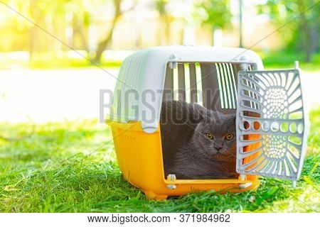 Cat In A Carrier On The Grass . Walking Pets. Cat In A Carrier. Transportation Of Animals.