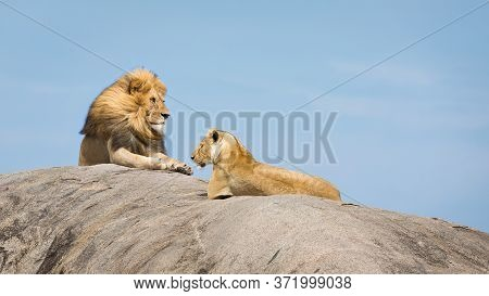 Lion King With A Beautiful Mane And His Lioness Lying On A Huge Rock With Blue Sky In The Background