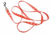 Red nylon dog lead or leash with paw print pattern isolated over white. poster