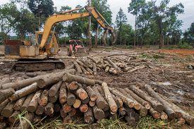 Deforestation and logging of tropical rainforest