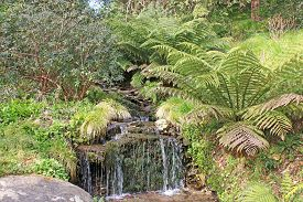 Waterfall On A Stream Between Ferns In Devon