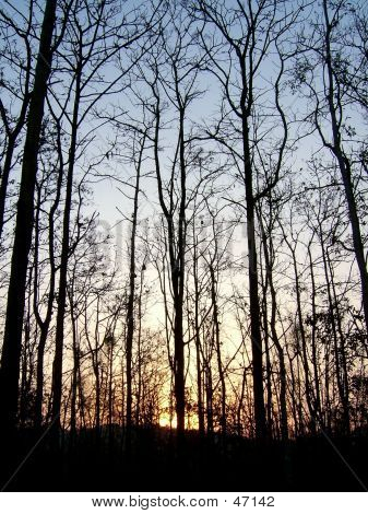 A Sunset In The Woods