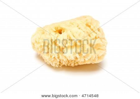 natural sponge isolated on a white studio background poster