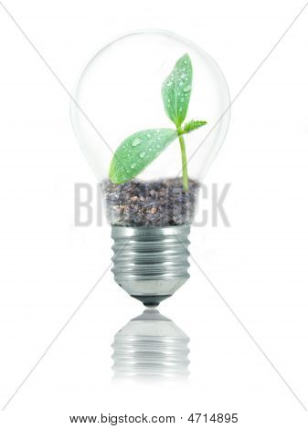 Eco Friendly Bulb
