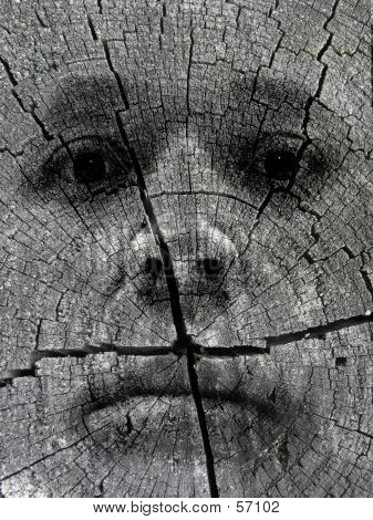 Face In A Log...