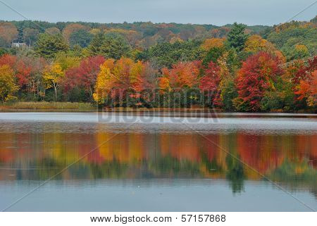 Colorful Fall Trees with a Pond Reflection