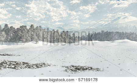 Distant Winter Woodland in Snow