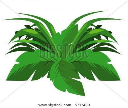 Tropical Bush