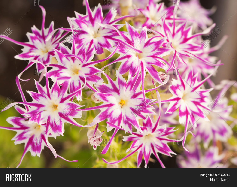 Beautiful Pink White Image Photo Free Trial Bigstock