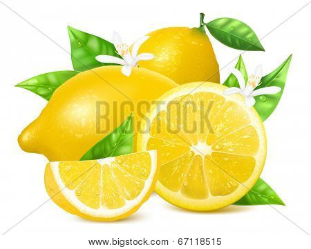 Vector. Fresh lemons with leaves and lemon blossoms.