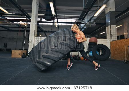 Fit female athlete working out with a huge tire turning and flipping in the gym. woman exercising with big tire. poster