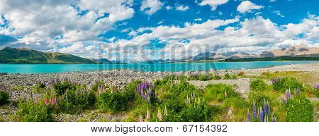 Beautiful incredibly blue lake Tekapo with blooming lupins on the shore and mountains, Southern Alps, on the other side. New Zealand, panoramic photo