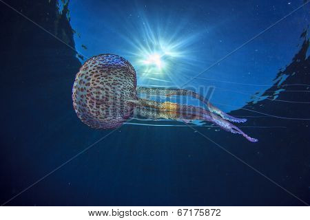 Jellyfish underwater and sun