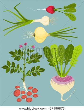 Growing Root Vegetables with Greens Collection