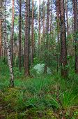 hidden in forest pitched tent - example of stealth camping - stock photo poster