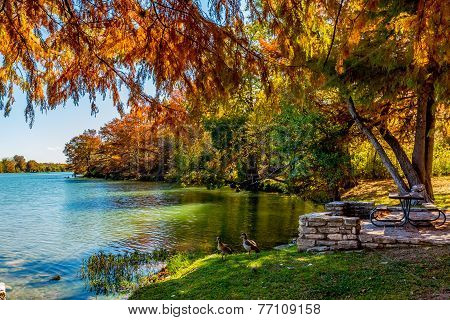 Bright Fall Foliage Surrounding the Guadalupe River, Texas.