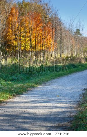 Fall Colors Along A Gravel Path