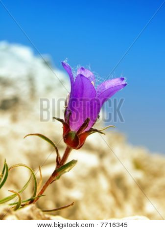 Flower on the rock