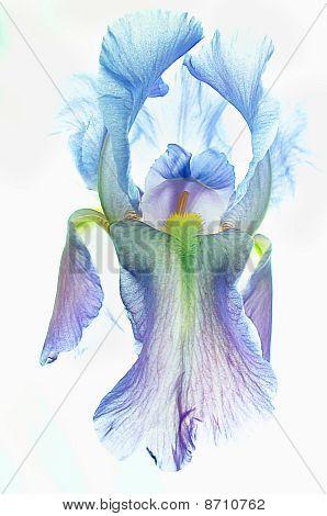 Iris, The Ballerina