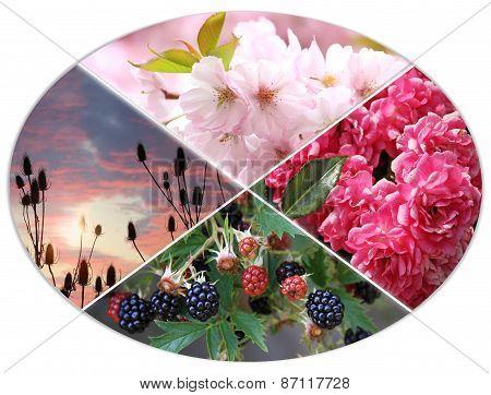 Four Seasons Circle Iii