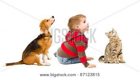 Cute boy, beagle dog and cat Scottish Straight