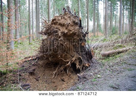Roots Of An Uprooted Tree