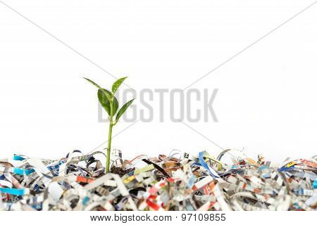 Young Green Plant In Stack Of Scrap Paper