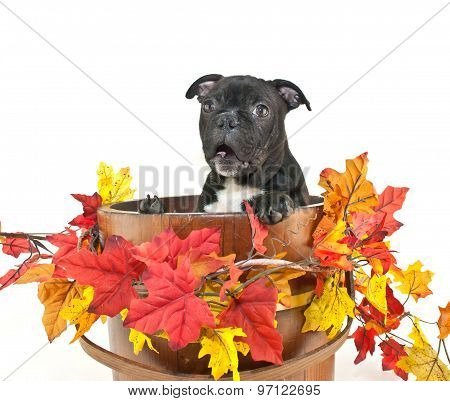 It's Fall Already!!!!!