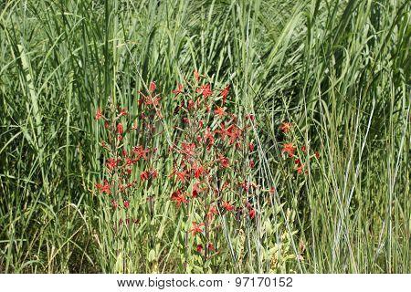 Beautiful summer time garden flowers at Morton Arboretum in Lisle, Illinois