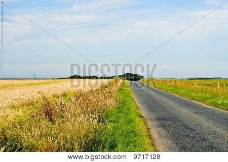Long Road Through Green And Yellow Fields