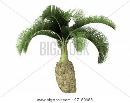 Tropical Plant Tree