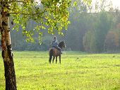 lady girl woman person horse horsewoman nature poster