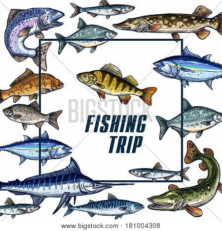 Fishing trip vector sketch poster for fisher club members. Design template of ocean or sea fishes herring trout, bream or tuna and marlin, salmon or pike and sheatfish on white frame background