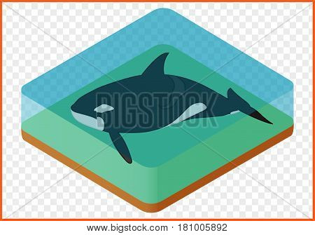 killer whale isometric isolated on transparent background vector. orcinus orca