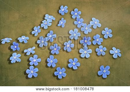 Tiny forget me not flowers on textured background