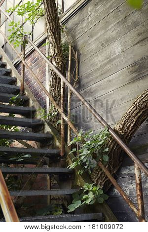 Old abandond Empty magical stairs with trees