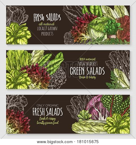 Fresh green salads vector banners set. Sketch lettuce design of organic vegetables chicory and oakleaf salads, vegetarian arugula or watercress and pak choi or gotukola collard and romaine sorrel