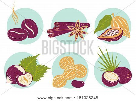 Vector vintage set nuts icons. Coffee beans coconut star anise cinnamon cocoa and peanuts.