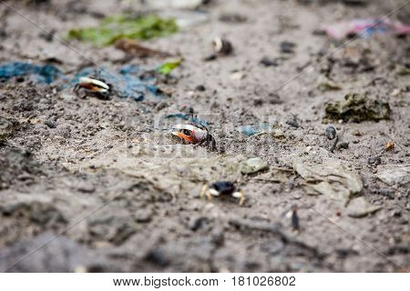 Small tiny crabs run around the birch in Cebu Philippines