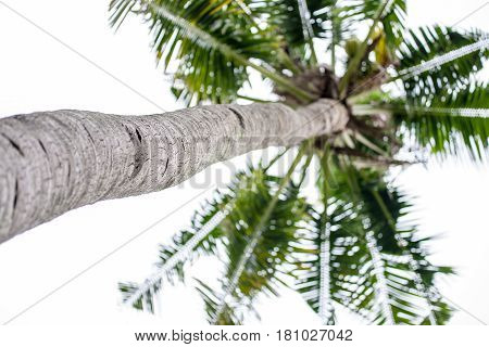 Single palm tree with ske background. Bottom view