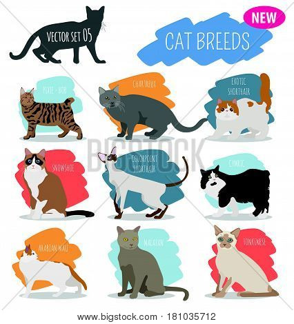 New Collection Cat Breeds_2